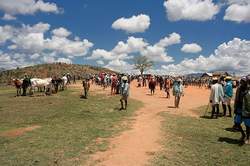 Photo of a Zebu Market in Madagascar